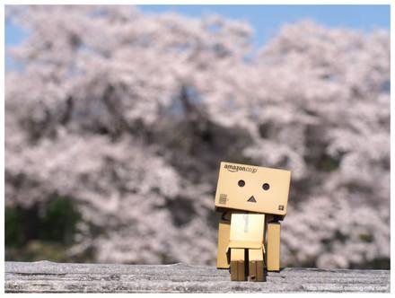Cherry_danboo