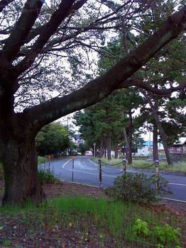 041007_namiki.jpg